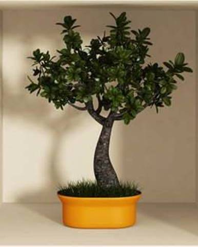 Sada 3 samolepek s 3D efektem Ambiance Bonsai Trees