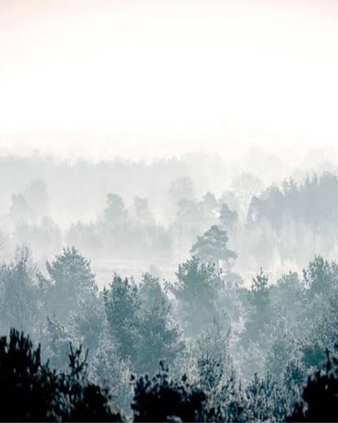 Artgeist Velkoformátová tapeta Artgeist Winter Forest 400x280cm