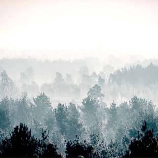 Velkoformátová tapeta Artgeist Winter Forest 400x280cm