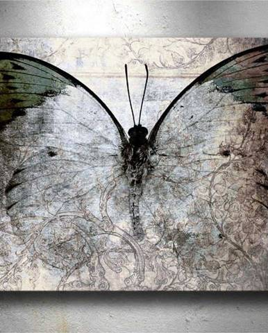 Obraz Tablo Center Fading Butterfly, 70x50cm