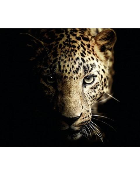 Monee Monee OBRAZ NA SKLE, zvířata, 120/80 cm - vícebarevná