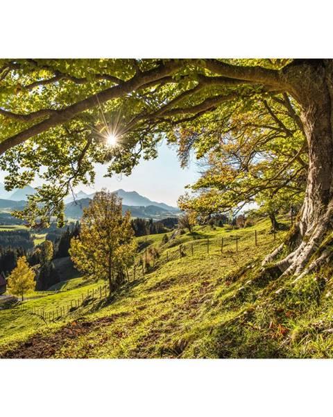 Monee Monee OBRAZ NA SKLE, krajina & příroda, 120/80 cm - vícebarevná