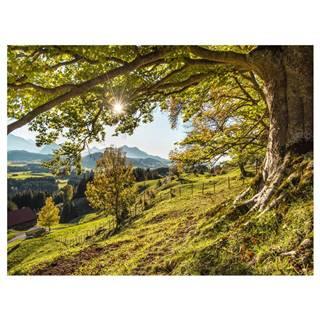 Monee OBRAZ NA SKLE, krajina & příroda, 120/80 cm - vícebarevná