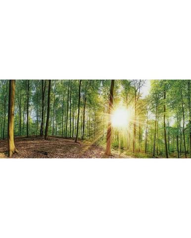 OBRAZ NA SKLE, stromy, 33/98 cm - vícebarevná