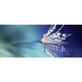 OBRAZ SKLENĚNÝ, květiny, 50/125/1,40 cm - vícebarevná