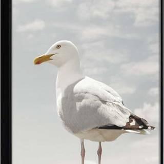 Plakát v rámu Artgeist Curious Seagull, 30 x 45 cm